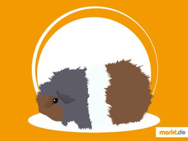 Grafik CH-Teddy Meerschweinchen