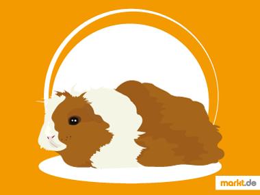 Grafik Merino Meerschweinchen