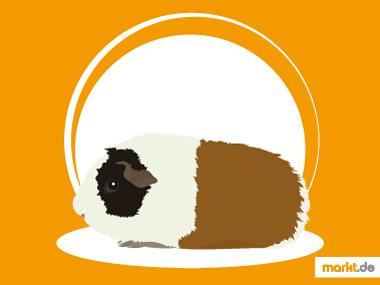 Grafik US-Teddy Meerschweinchen