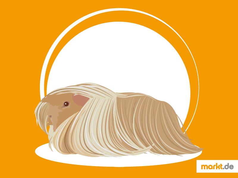 Fantastisch Meerschweinchen Anatomie Bilder - Anatomie Ideen ...