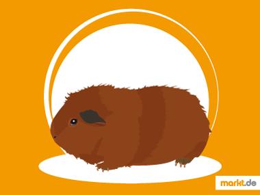 Grafik Rex Meerschweinchen Portrait