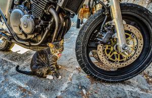 Bild Motorrad und Katze