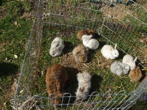 tipps zur haltung von kaninchen garten oder wohnung. Black Bedroom Furniture Sets. Home Design Ideas