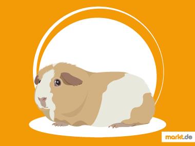 Grafik Glatthaarmeerschweinchen