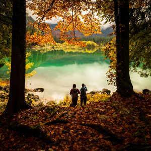 Bild Waldspaziergang im Herbst