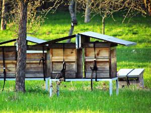 Bild Bienenzucht Bienenstock