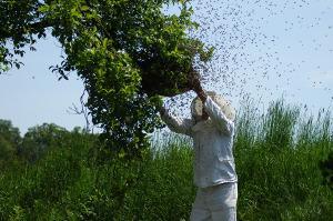 Bild Bienenzucht Schutzkleidung