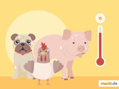 Nutztiere vor Hitze schützen
