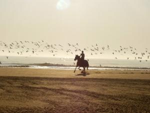 Bild Ausritt mit Pferd