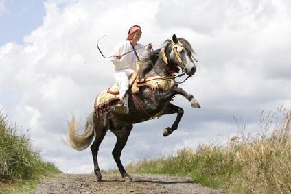 Berber mit Reiter