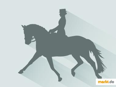 Pferd mit reiter Doma Clasica