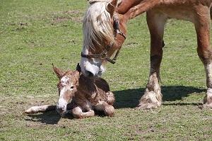 Fohlen mit Mutter.