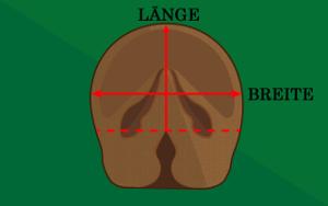 Bild Hufe ausmessen