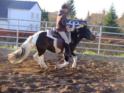 Huzule mit Reiter