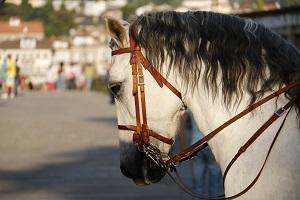 Bild Pferd mit Kandare