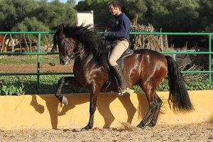 Reiter zeigt Lektion mit Pferd