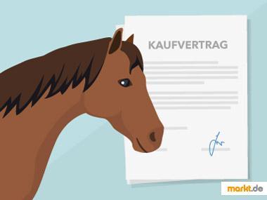 Grafik Mustervertrag Kaufvertrag Pferde