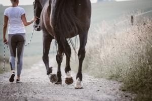 Frau mit Pferd auf einem Feldweg