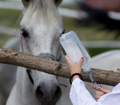 Pferd Impfung