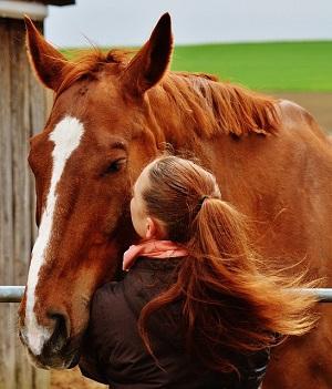 Bild Pferd mit Besitzerin