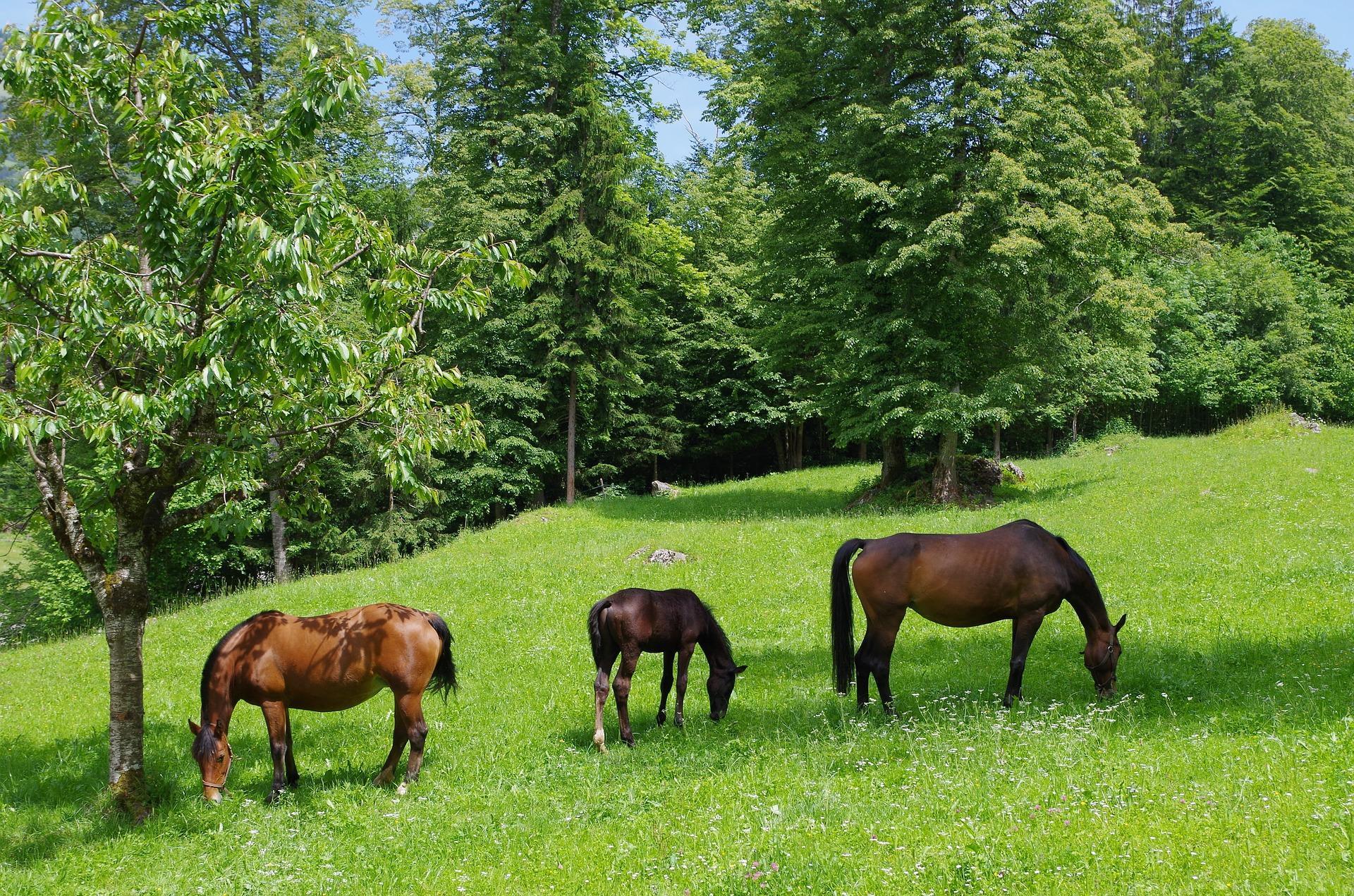 Bild Pferde auf der Weide