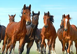 Welche guten Pferdefilme gibt es?   markt de