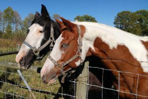 Pferde Zaun