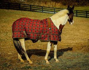 Bild Pferd mit rot karrierter Pferdedecke