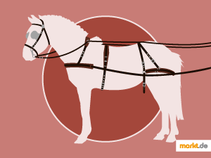 Bild Pferd mit Pferdegeschirr