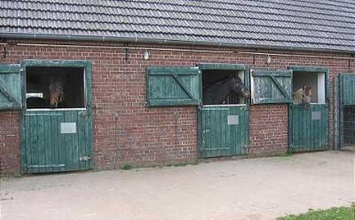Pferde, Stall, Box