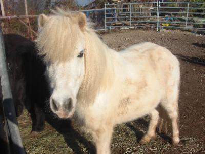 Pferdetherapeuten bei markt.de