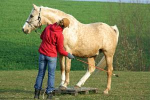 Bild weißes Pferd mit Reiter