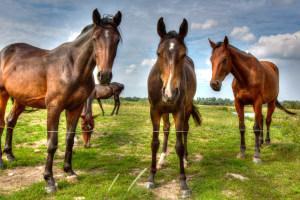 Pferdeweide mit Kahlstellen