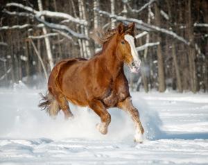 Bild Pferd im Schnee