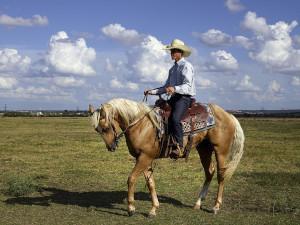 Quarter Horse Cowboyreiten