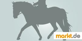 Bild seitliches Pferd