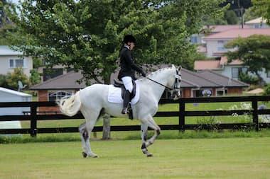 Reiterin und Pferd beim Turnier