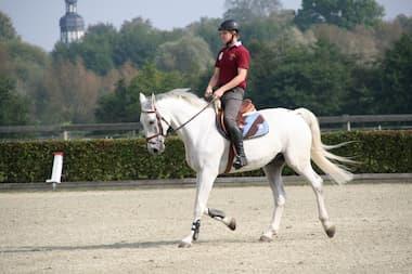 Reiter und Pferd beim Turnier