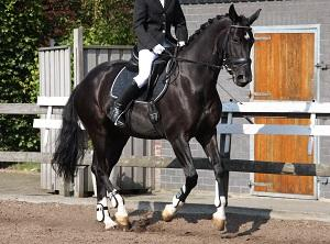 Bild Reiter auf Pferd