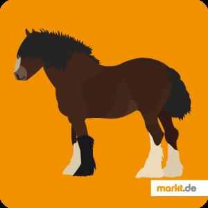 Pferderasse Shire Horse