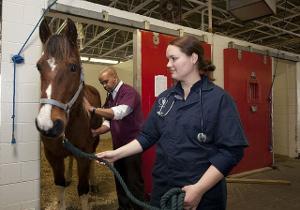 Bild Tierarzt Pferd