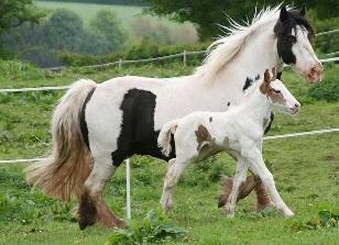 beliebte pferdenamen den passenden namen finden. Black Bedroom Furniture Sets. Home Design Ideas