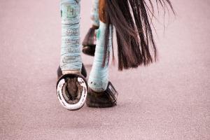 Bandage Pferd