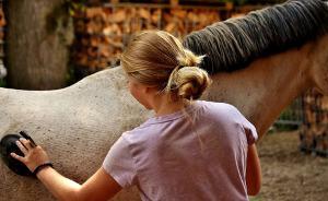 Bild Voltigierpferd Pflege