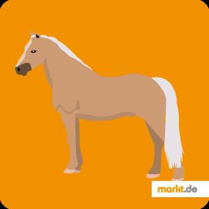 Bild Pferderasse Welsh Pony