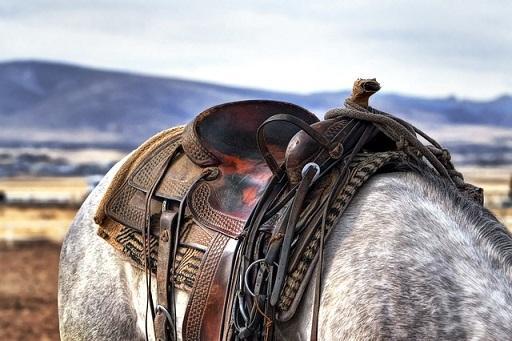 Bild brauner Westernsattel auf Pferderücken