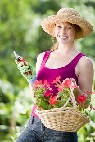 Bild Blumenschneiden Gärtnerin