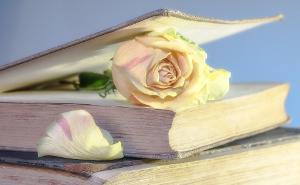 Rosen im Buch