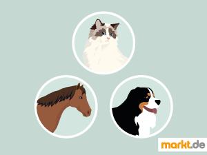 Bild Hund, weiße Katze und braunes Pferd