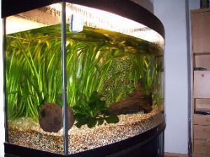 Bild von einem Aquarium